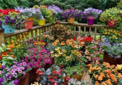 Blumengarten-Ideen