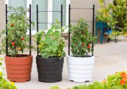 Home Gemüsegarten Ideen