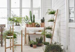 Indoor Garten Ideen