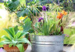 einfache Gartenideen für Container